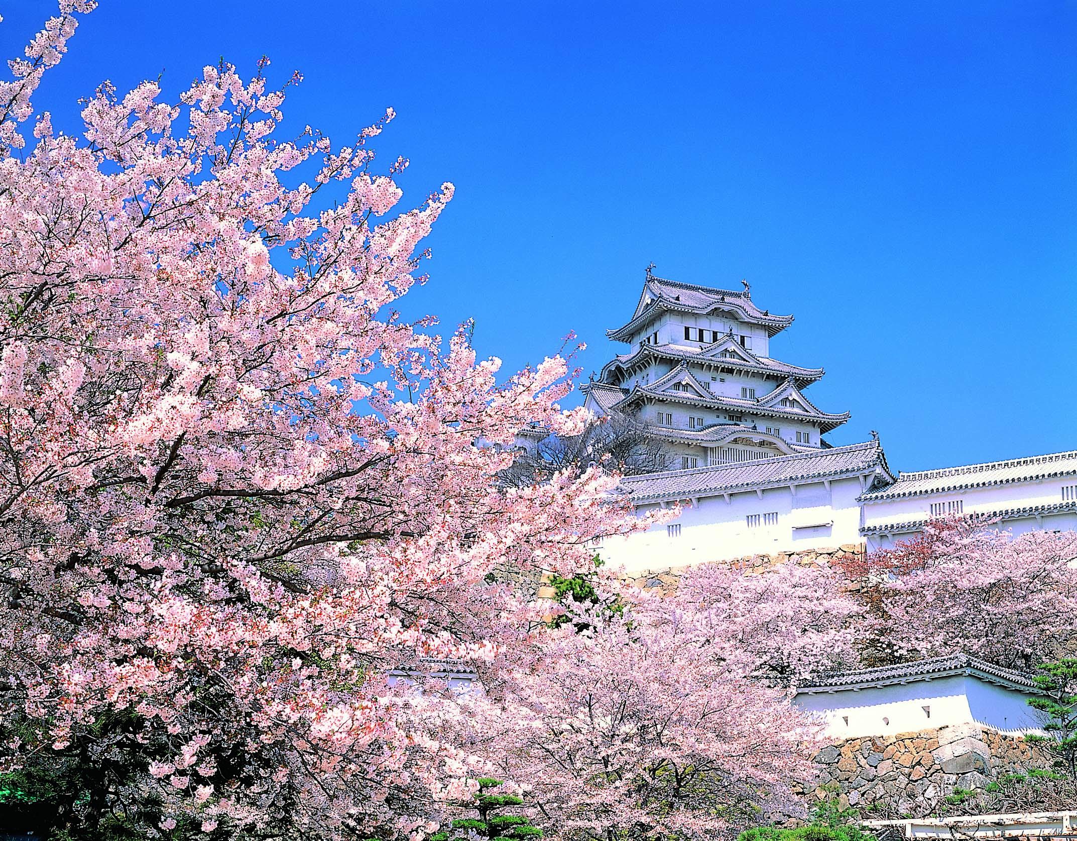 Cherry Blossoms 일본으로 떠나는 꽃구경 언제가 좋을까 겟어바웃