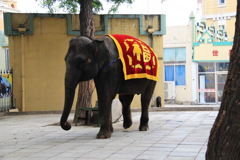 베이징 세계공원 코끼리