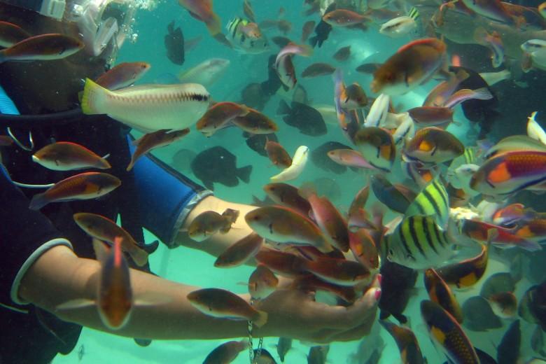 CBluewaterPanglao-Diving-068