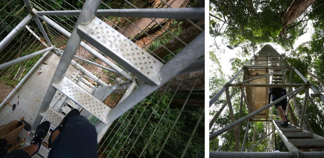 브루나이_울루템부룽공원-009_21180186.jpg