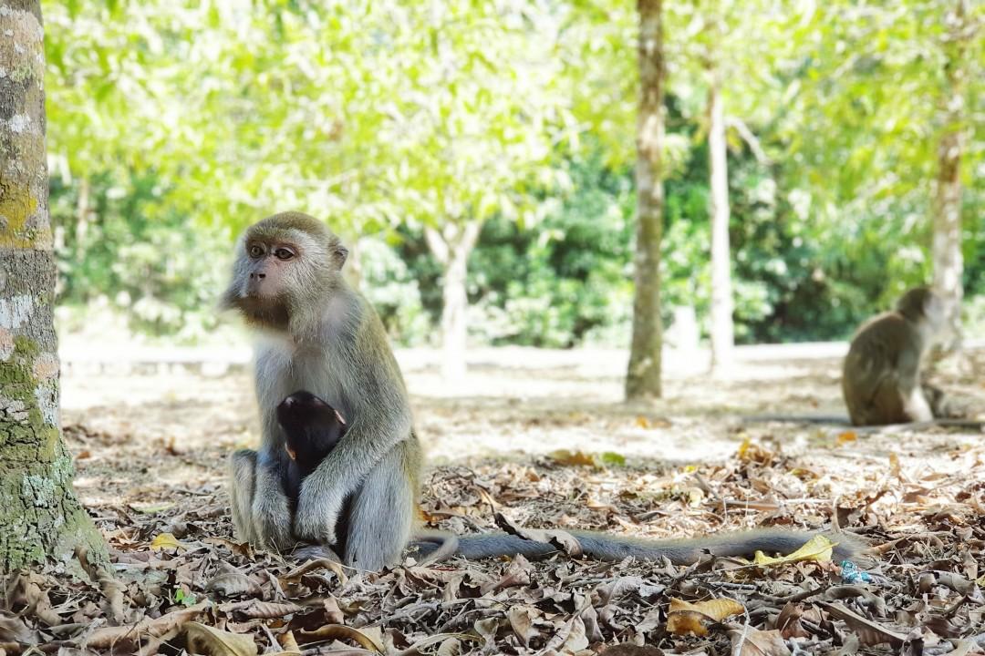 원숭이_(2)_54704490.jpg