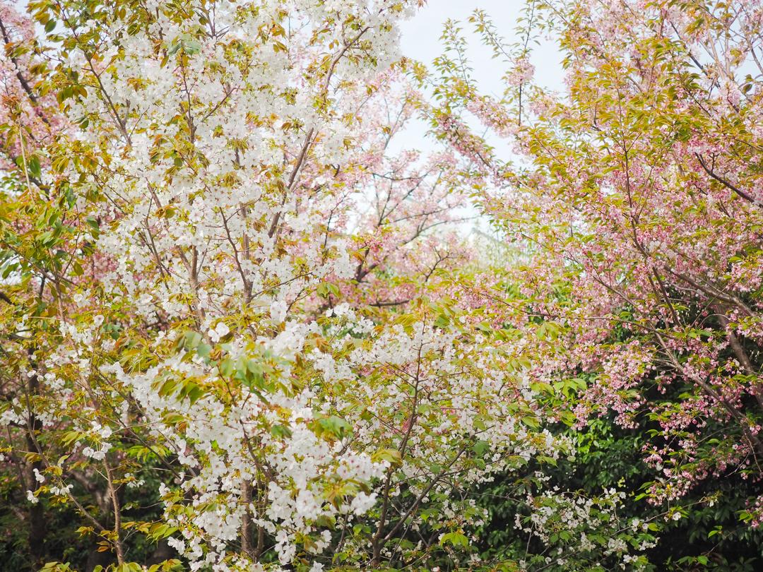 오카모토마을-2_39796786.jpg